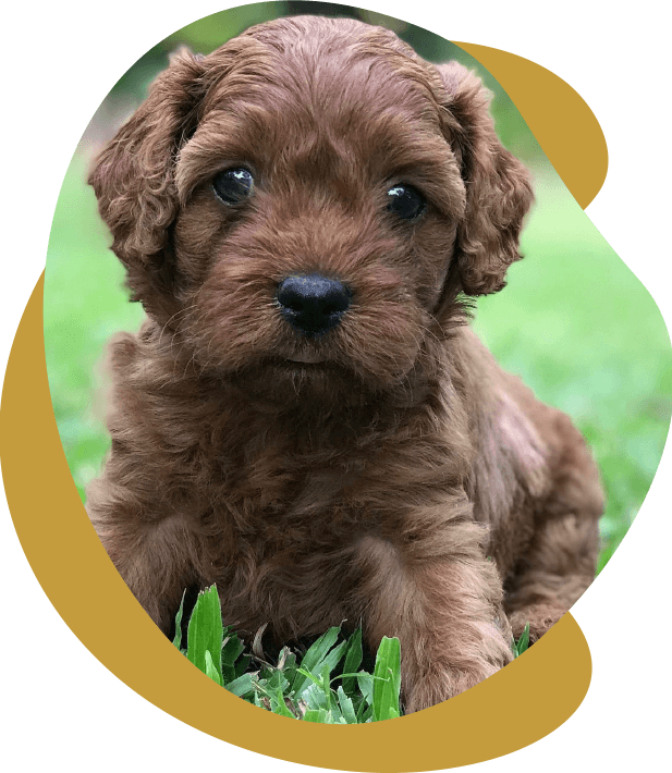 A puppy siting on some grass, close up